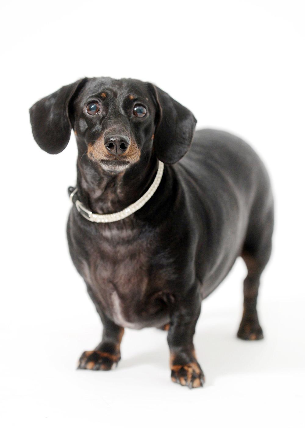 dog-portrait-little-rock