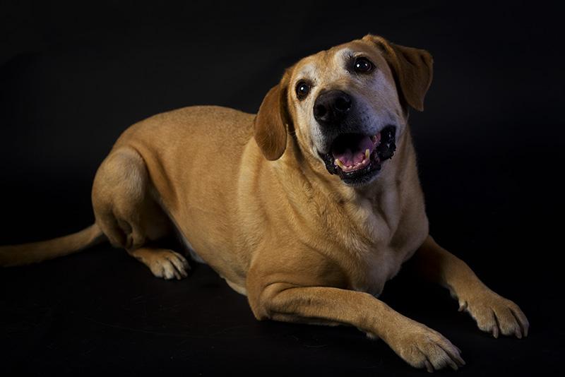 """Nimrod (""""Nimi"""") the Dog"""