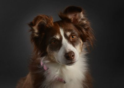Dog-portraits-Little-Rock