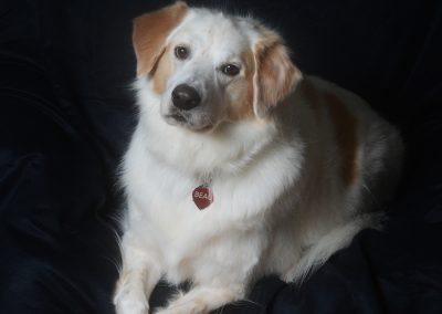 dog studio portrait little rock