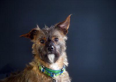 dog studio portrait