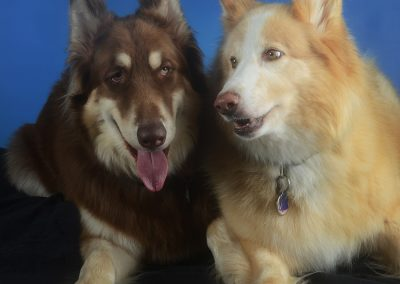 two dogs studio portrait cute expression