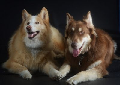 two dogs studio portrait holding paws