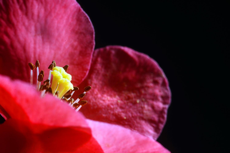Studio Art Flower