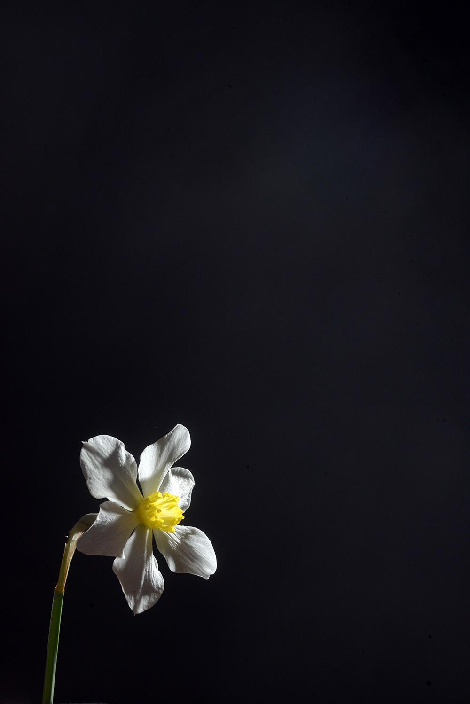 Studio Art Flower black backdrop